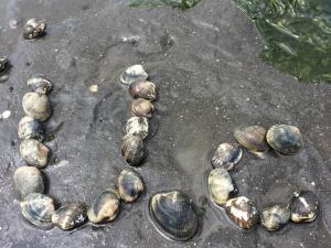 木更津で潮干狩り!2015年の潮見表