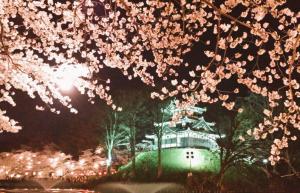 高田公園の観桜会とライブ情報!2015年は