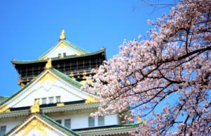 大阪城公園の桜2015