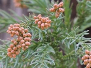 花粉症の症状と鼻水の色について