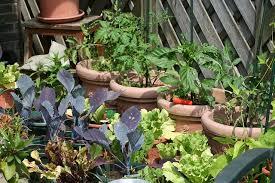 春野菜を自分で栽培
