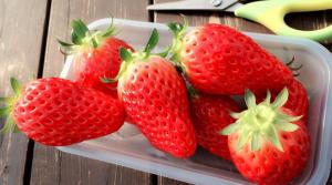 イチゴ狩りを大阪でするなら?2015年